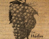 The WALTER Grape Text GRAPES Wine Fruit Digital Collage Sheet Download Burlap Fabric Transfer Iron On Pillows Totes Tea Towels No. 3828