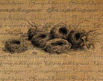 Display of Birds Nests Bird Nest Digital Image Download Transfers To Pillows Totes Tea Towels Burlap No. 1868