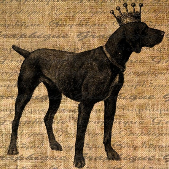 German Shorthaired Pointer Dog Crown Royal Digital Image Download Sheet Transfer To Pillows Tote Bags Tea Towels  Burlap No. 1820