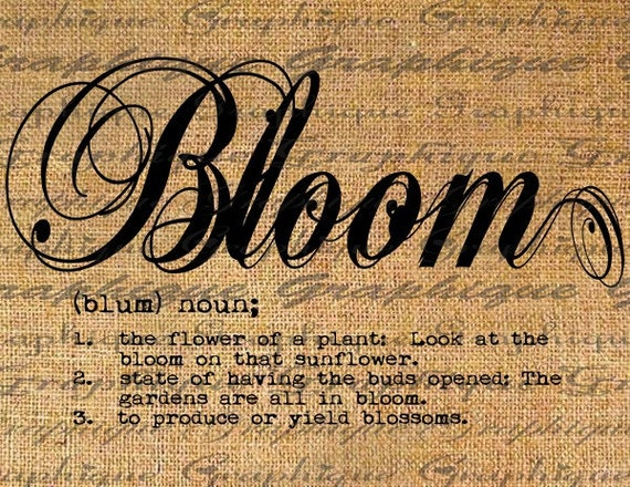 Dictionary Definition Word Bloom Typography Digital By