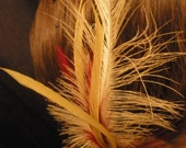 Red and Ivory Feather Hair Clip