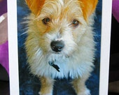 Wednesday - Animal Rescue Greeting Card