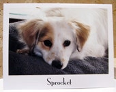 Sprocket  - Donation to Animal Rescue Group