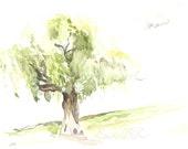 Little Weeping Willow Tree - original watercolor