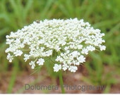 Nature Photograph, Fit for a Queen, Fine Art Photography, 5x7 or 8x10 Color Print, North Carolina Wildflower Queen Anne's Lace, Garden, Gift
