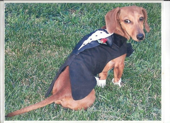 Small Dog Tuxedo Wedding Costume comes in Toy, Small and Medium