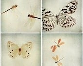 SALE Butterflies and Dragonflies: Four 5x5 Fine Art Photography Blue grey Prints Spring Home Decor Wall Art SAVE 40% OFF