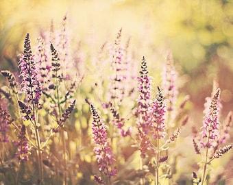 Flower Photo: an afternoon dream fine art photography purple yellow nature photography wall art botanical art prints wall decor Spring