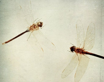 Dragonfly Print: Dragonfly Pair Fine Art Photography wall art decor orange Still life photography, Nature Photography, Dragonfly art