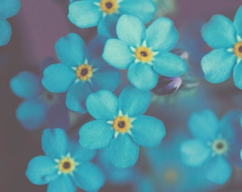 Narue Photography Flower Photo: Forget me not Fine Art Macro Photography blue wall art botanical art prints wall decor Spring Flowers Print