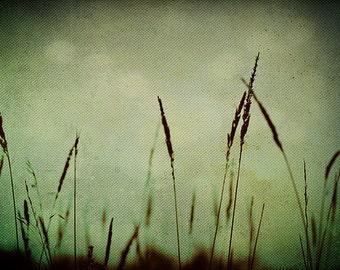 "Nature Photography, Fine Art Photography ""Whispering"" mint green wall art botanical art prints wall decor Still life Photography, grass art"