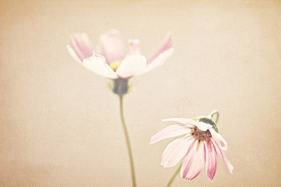 Nature Photography: Sisters Art Fine Art Photography Girls Room Art Cosmos Pink Wall Art Flower photo, Soft Pretty still life Photography