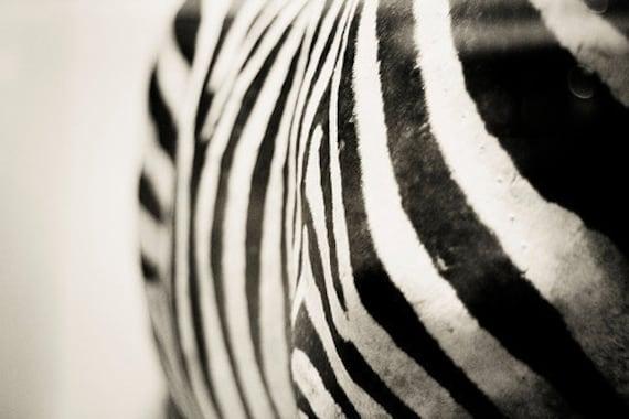 Zebra Print Wall Art Abstract Fine Art Photography Grey Black and White Photography Animal Photography Zebra Stripes