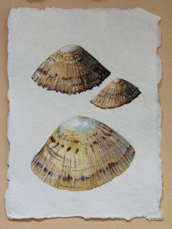 Original watercolour illustration art painting shell study limpets