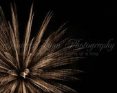 neutral decor wall art gold bronze black photography / 8x8 Fine Art Photograph / firework / gold black