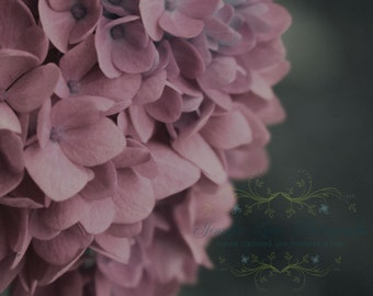pink decor flower photography blush mauve gray grey hydrangea / IN STOCK / 8x10 Fine Art Photograph / Faded Blush