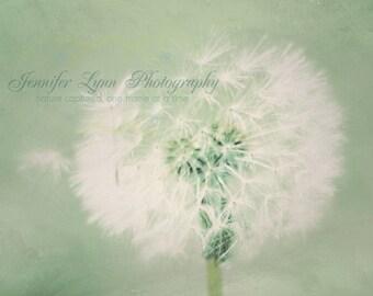 mint decor dandelion photography mint white green /  8x10 Fine Art Photograph / Radiant Mint