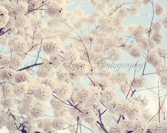 neutral decor white flower photography / IN STOCK / 8x8 Fine Art Photograph / Cherry Blossoms n.7