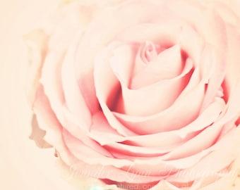 pink decor rose flower photography  / Fine Art Photograph / Light Rose n1