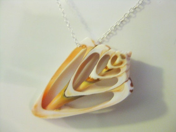 Conus Shell Cross-section and Sterling Silver Pendant Necklace