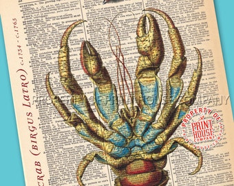 """Crab, Dictionary Print, Vintage Natural History Illustration, Printed on an 8""""x11"""" Antique Dictionary Page."""