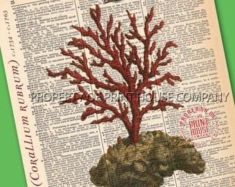 """Coral, Dictionary Print, Vintage Natural History Illustration, Printed on an 8""""x11"""" Antique Dictionary Page."""