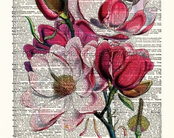 """Magnolia, flower dictionary print, vintage botanical illustration, printed on an 8.5""""x11.5"""" antique dictionary page."""