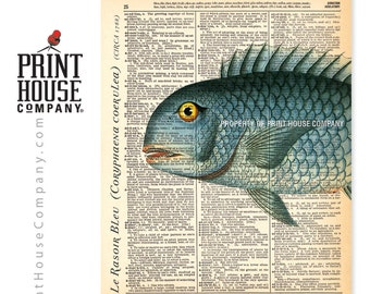 "Le Rasoir Bleu, sea-life print, vintage fish illustration, printed on an 8""x11"" antique dictionary page, enhanced with metallic pigments."
