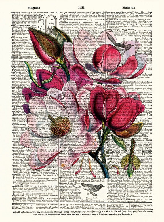 "Magnolia, flower dictionary print, vintage botanical illustration, printed on an 8.5""x11.5"" antique dictionary page."