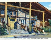 Reserved for tspdddd only H-4491 Postcard Deer on Steps, Bright Angel Lodge, Grand Canyon AZ