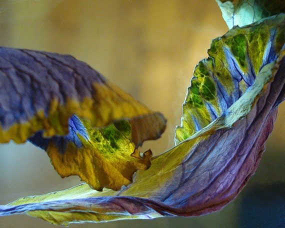 Leaves Fine Art Photography Note Cards