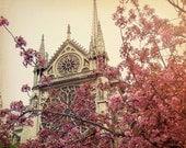 paris photo, cherry blossom, notre dame photo, springtime in paris, sepia, pink, 8x10 fine art photo, france, spring
