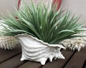 Vintage Ceramic White Conch Shell Planter Vase,  Small