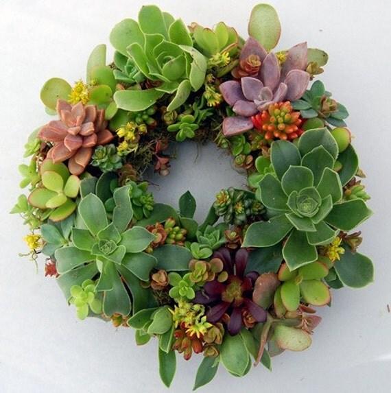 "Succulent Wreath Spring Color 9"""