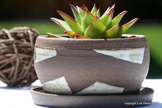 Cactus pot - Modern