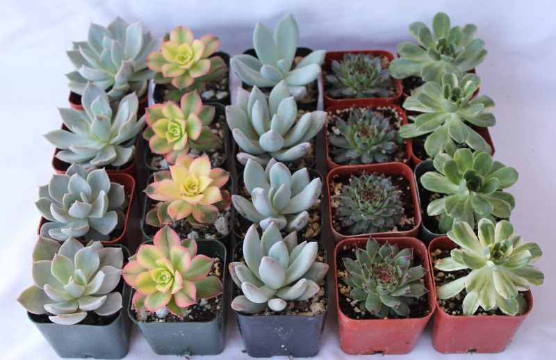 9 Wedding Favors Gifts Potted Succulent Plants By SANPEDROCACTUS