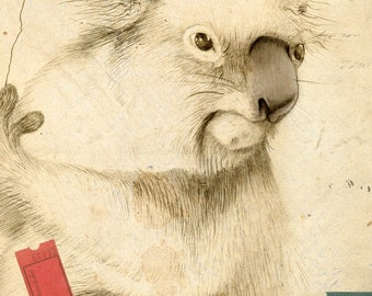 Limited Edition Archival Print 'Koala'