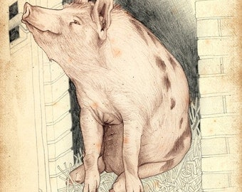 Limited Edition Archival Print 'Pig'