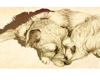 Limited Edition Archival Print 'Border Terrier'