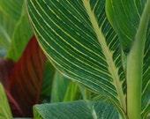 Pond Plants - Fine Art Photograph - 5x7 matted close-up print of green garden pond plants