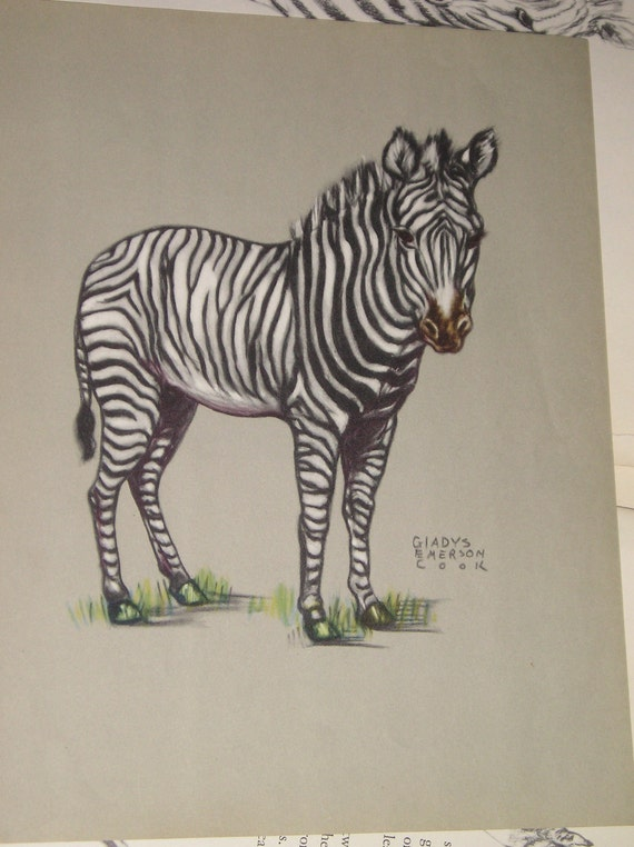 Reserved for Nora . . .Zebra Book Plates by Gladys Emerson Cook  from Carlas Vintage Finds