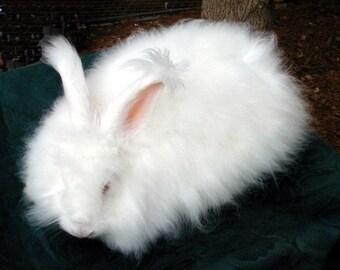 BEAUTIFUL White Angora Rabbit Wool spinning fiber felting ready to use
