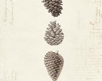 "Vintage Pine Cones ""Trois Cones De Pin"" on French Ephemera Print 8x10 P6"