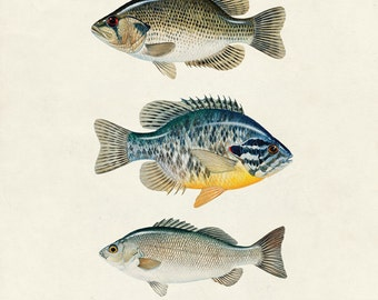 "Vintage Fish ""Les Poissons"" Print 8x10 P9"