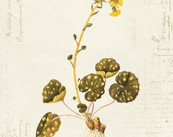 Vintage Botanical Flower on French Ephemera Print 8x10 P19
