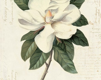 Vintage Botanical Magnolia on French Ephemera Print 8x10 P40
