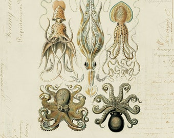 Vintage Octopus Squid on French Ephemera Print 8x10 P60