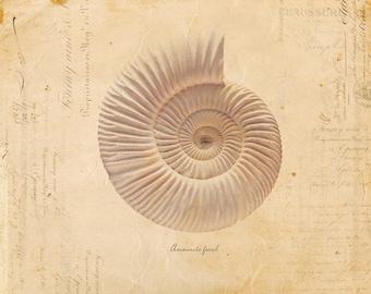 Vintage Fossil Shell on French Ephemera Print 8x10 P66