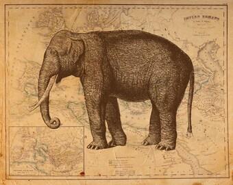 Vintage Elephant on Antique Roman Empire Map Print 8x10 P71