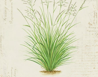 "Vintage Botanical Plant Grass ""Tussock Grass"" on French Ephemera Print 8x10 P115"